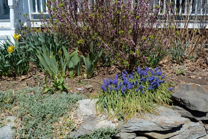 april_garden-5