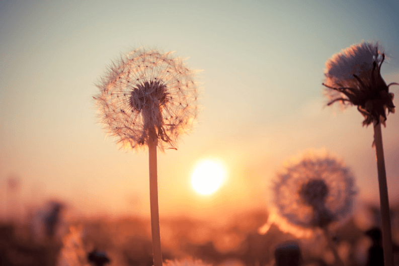 Even though allergies may have you feeling not-so-fond of nature right now, you can use it to your advantage! Here are a few herbal remedies for allergies.