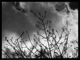140504-145525_Trees-Edit