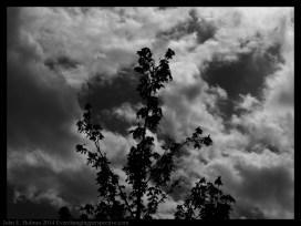 140504-145641_Trees-Edit