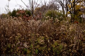 141031-091812_Plum Creek