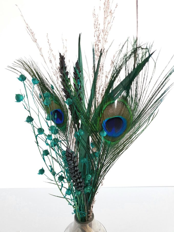 """""""The LITTLE Peacock"""""""