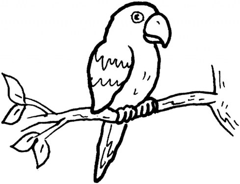 Free Parrot Coloring Pages 46159