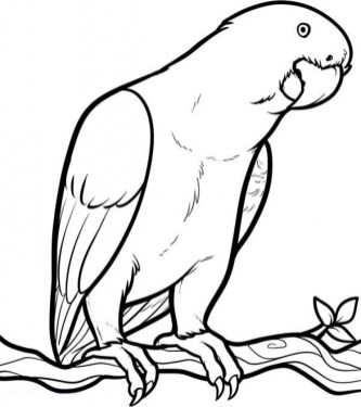 Free Parrot Coloring Pages 92377