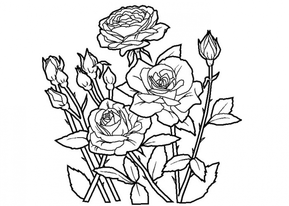 Get This Free Roses Coloring Pages for Adults to Print 16629