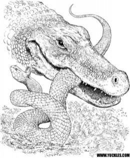 Free Simple Alligator Coloring Pages for Children af8vj