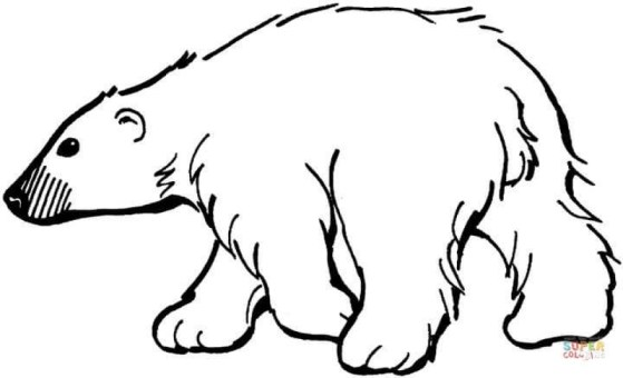 Free Simple Polar Bear Coloring Pages for Children af8vj
