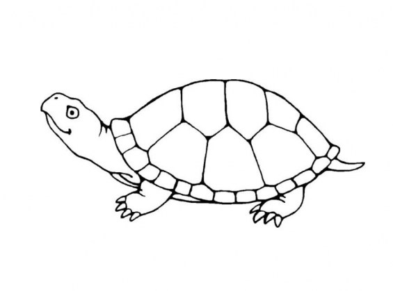 Free Turtle Coloring Pages for Kids yy6l0