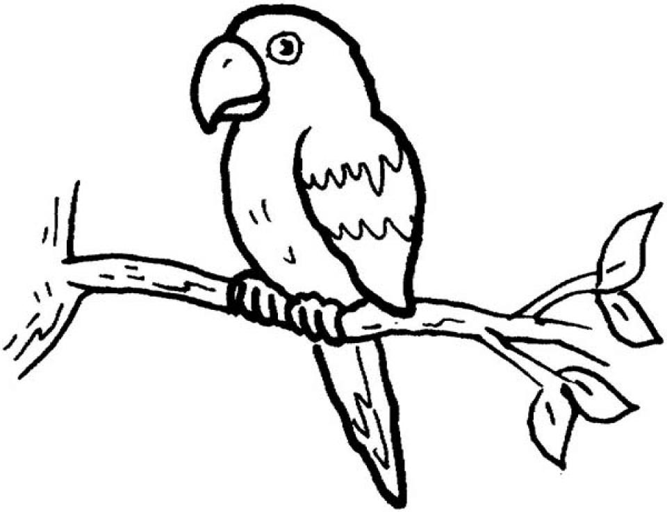 Online Parrot Coloring Pages   88275