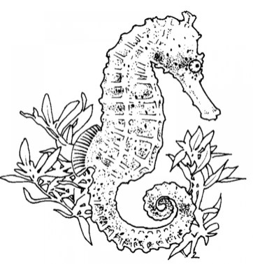 Online Seahorse Coloring Pages 37425