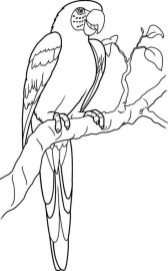 Parrot Coloring Pages Free Printable 9548