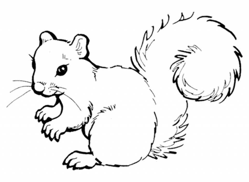 Get This Preschool Printables of Squirrel Coloring Pages