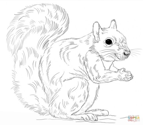 Preschool Squirrel Coloring Pages to Print nob6i