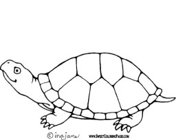Printable Image of Turtle Coloring Pages t2o1m
