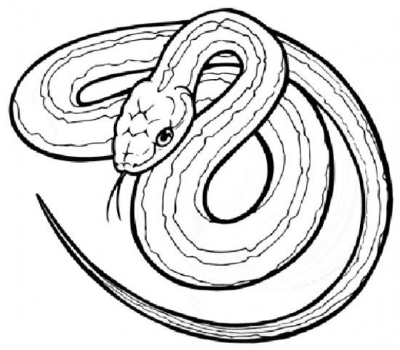 Free Snake Coloring Pages 33958