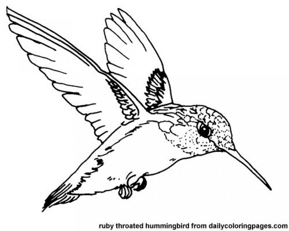 Get This Printable Hummingbird Coloring Pages 00467