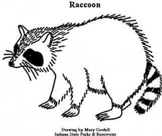 Printable Raccoon Coloring Pages 01827