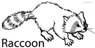 Printable Raccoon Coloring Pages 42472