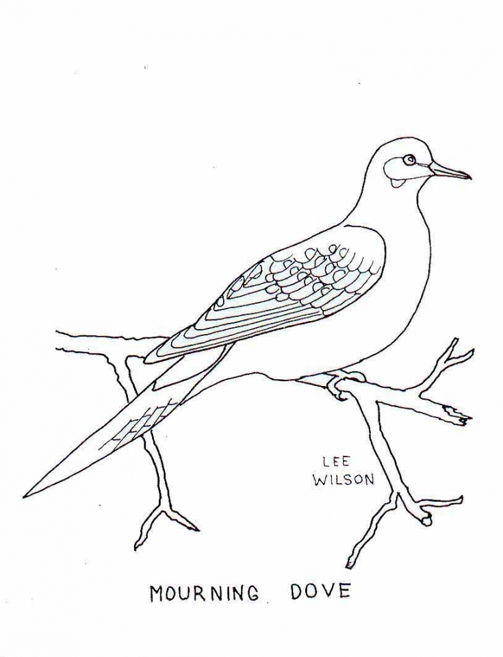 Bird Coloring Pages Free Online   94971