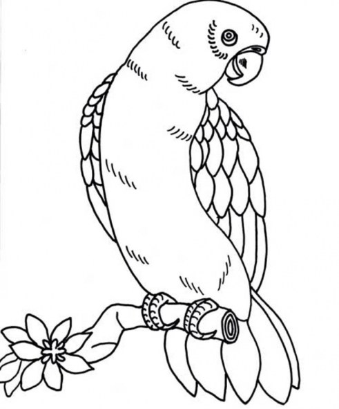Bird Coloring Pages Free to Print 68349