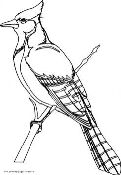 Bird Coloring Pages to Print for Kids 25163