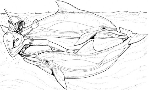 Dolphin Coloring Pages Free to Print 64581