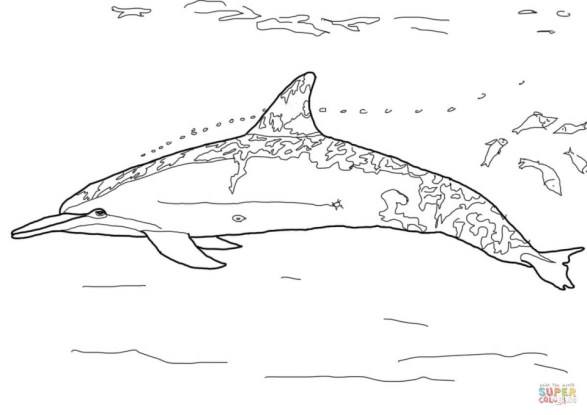 Free Printable Dolphin Coloring Pages for Kids 83510
