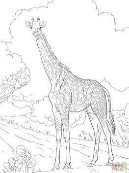 Giraffe Coloring Pages Hard Printables for Older Kids 41920