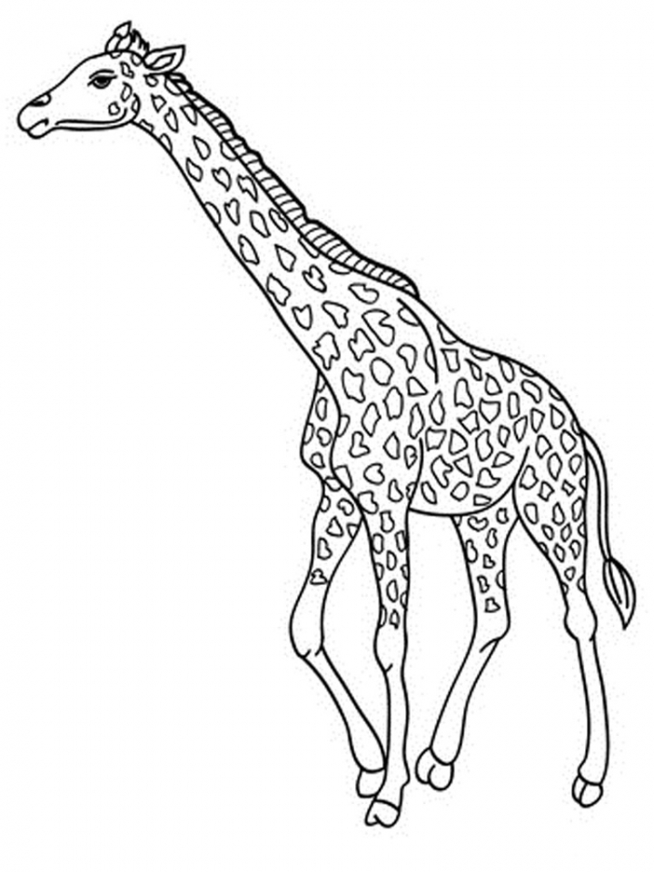 Get This Giraffe Coloring Pages Realistic Animals 27601