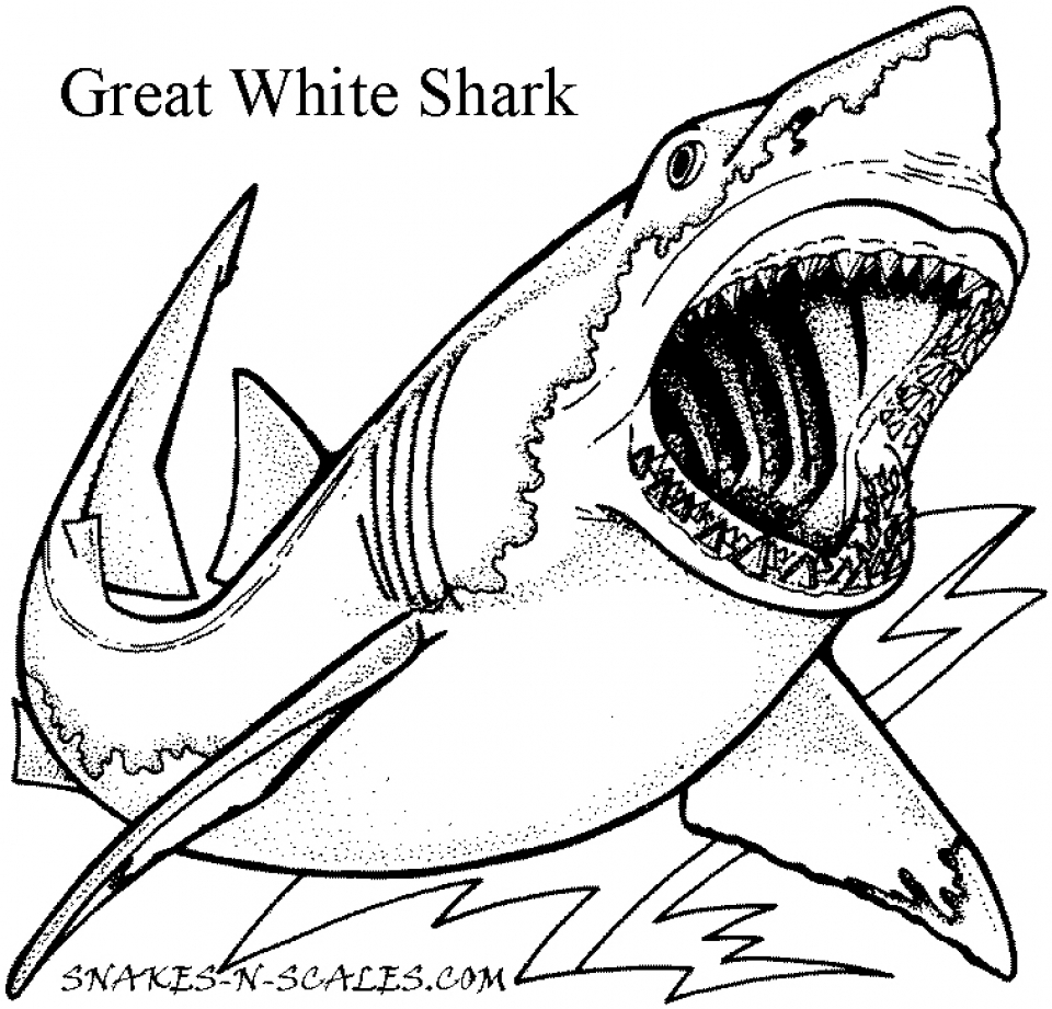 Great White Shark Coloring Pages   12759