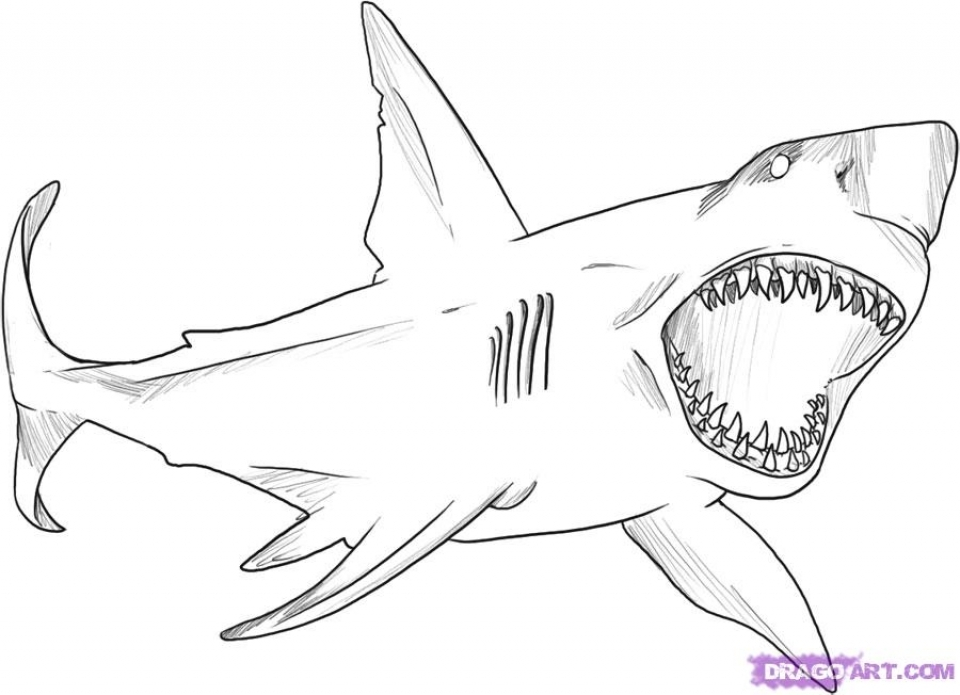 Great White Shark Coloring Pages   41665