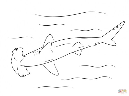 Hammerhead Shark Coloring Pages 99671