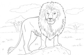 Lion Coloring Pages for Adults to Print 33648