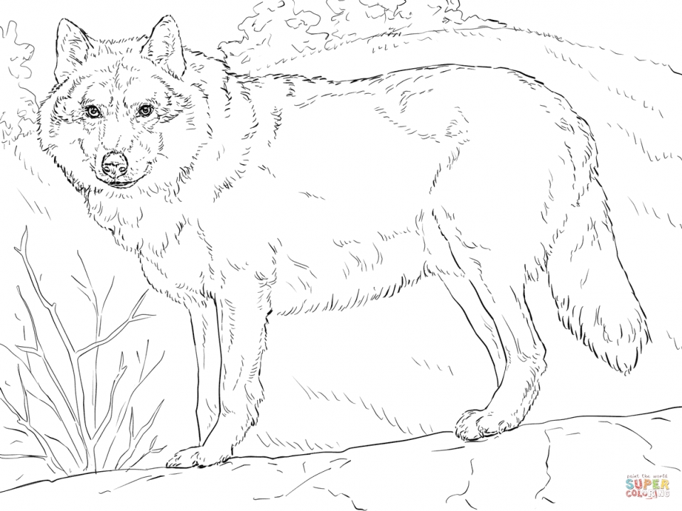 Realistic Wolf Coloring Pages for Adults Free Printable   21775