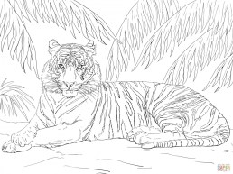 Tiger Coloring Pages for Adults 26138