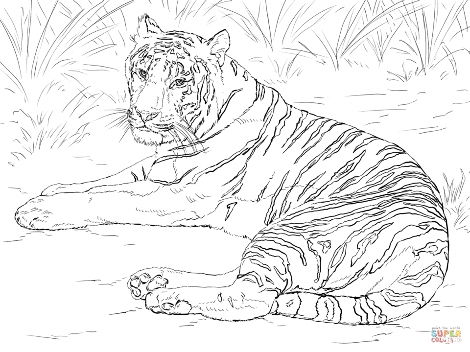 Tiger Coloring Pages for Adults   76312