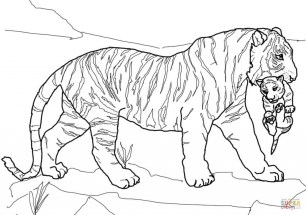 Tiger Coloring Pages Printable 80602