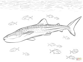Whale Shark Coloring Pages 67317