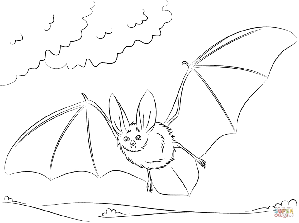 Bat coloring pages free to print   90578