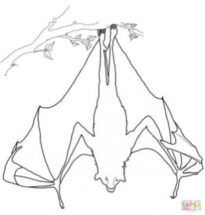Bat sleeping upside down coloring page 14416
