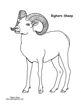 Bighorn sheep coloring pages 8316a