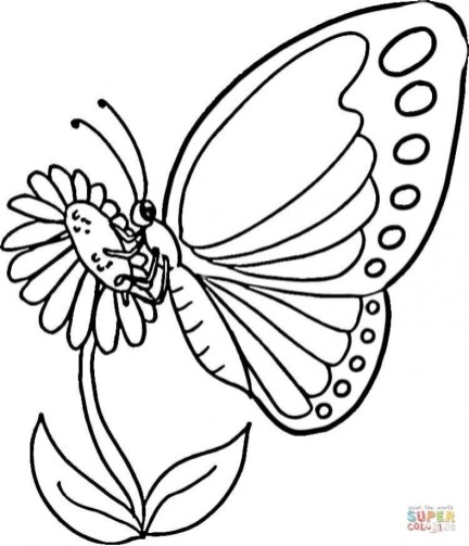 Butterfly Coloring Book Pages 861te
