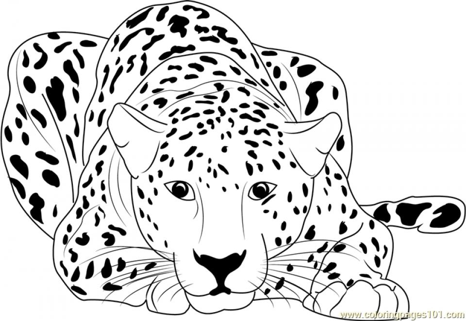 Cheetah Coloring Pages Printable   yan30