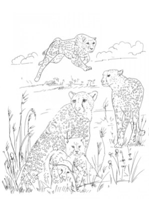 Cheetah Coloring Pages to Print 7xb3m