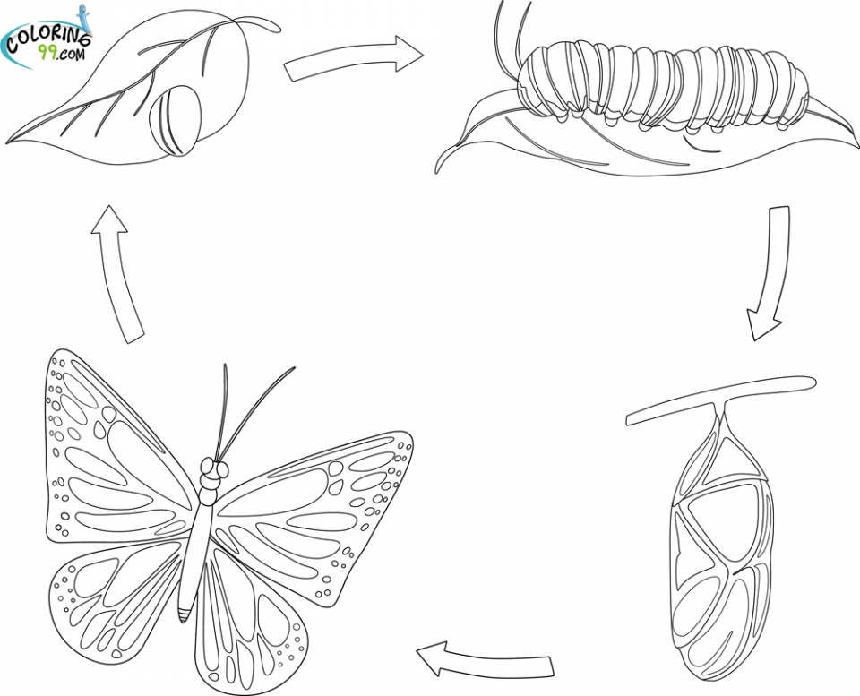 Get This Printable Baby Animal Coloring Pages Online 64038