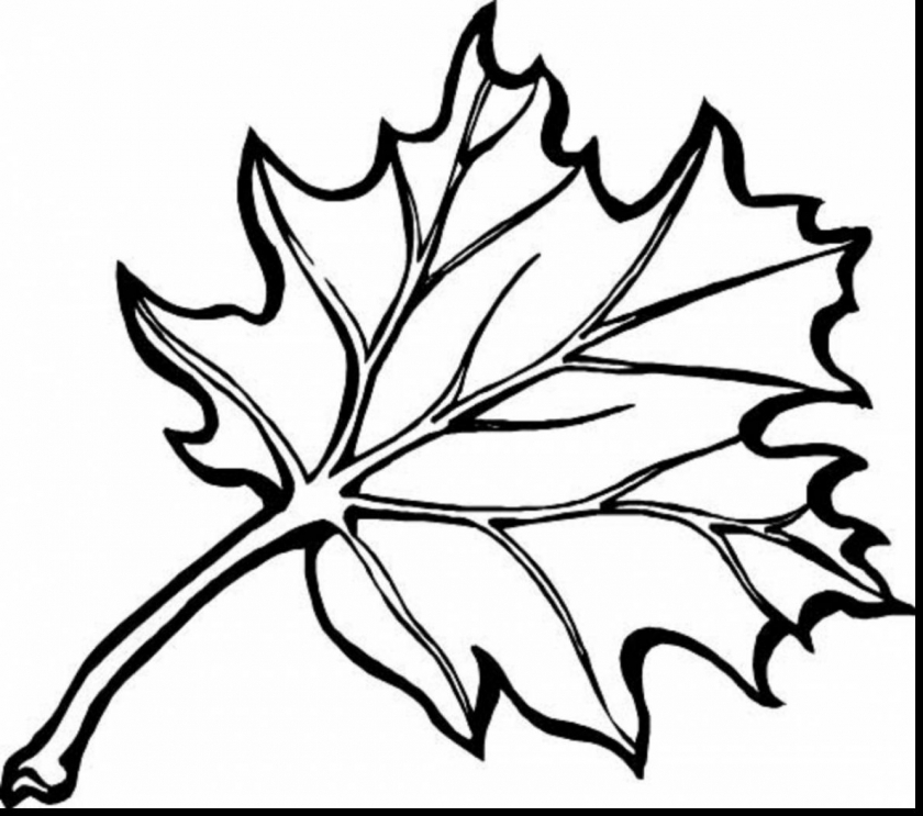 fall leaves coloring pages for kindergarten   i681a