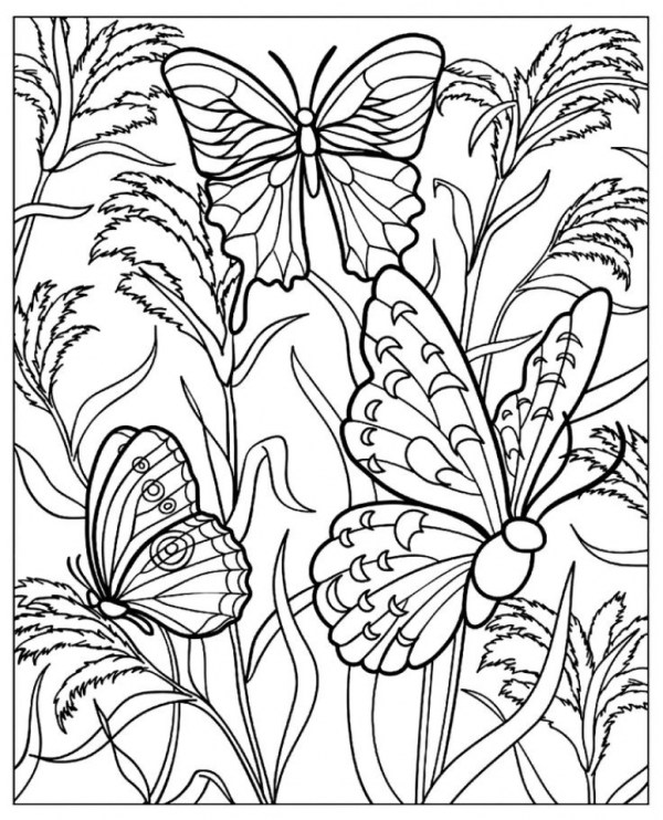 free printable butterfly coloring pages # 29