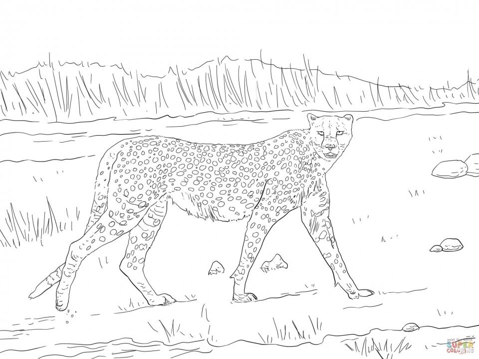 Free Printable Cheetah Coloring Pages   at2n5