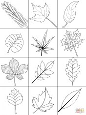 Leaf Coloring Pages Free to Print 75nv1