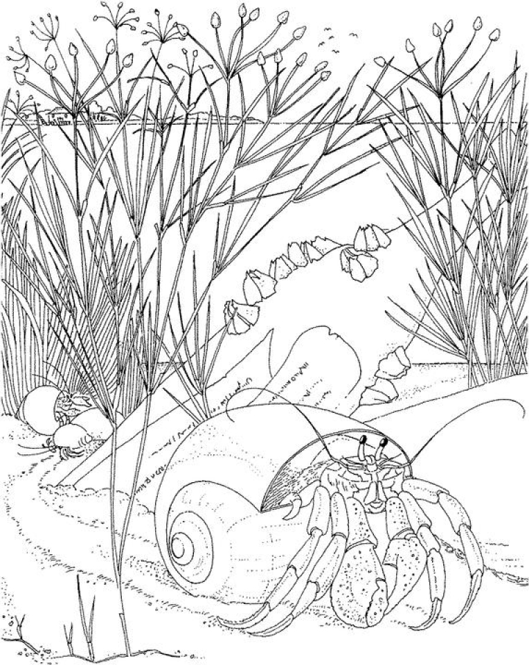 Ocean Coloring Pages for Adults   8b461